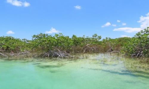 Zdjecie MEKSYK / Tulum / Muyil / Namorzyny w lagunie