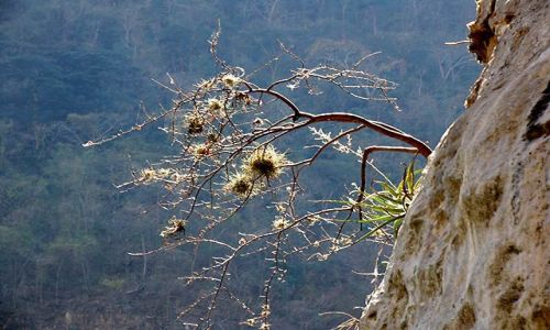 Zdjecie MEKSYK / Chiapas / Kanion del Sumidero / w kanionie 4