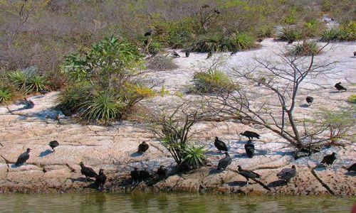 Zdjecie MEKSYK / Chiapas / Kanion del Sumidero / w kanionie 9