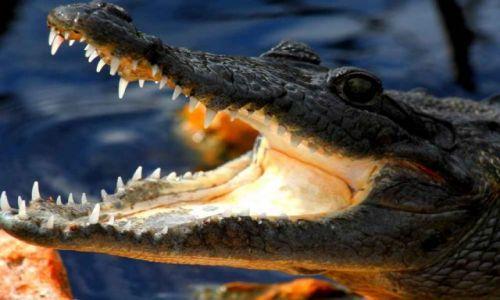 Zdjęcie MEKSYK / Quintana Roo / sian kan / krokodylek...