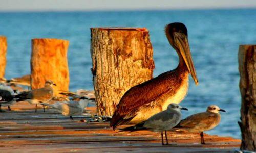 Zdjecie MEKSYK / Quintana Roo / Punta Herrero / ...