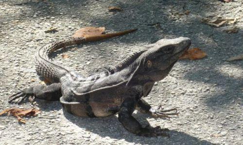 Zdjecie MEKSYK / Jukatan / Okolice Tulum / Gadzina