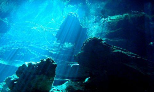 Zdjęcie MEKSYK / Cancun / Meksyk / Meksyk Nurkowanie
