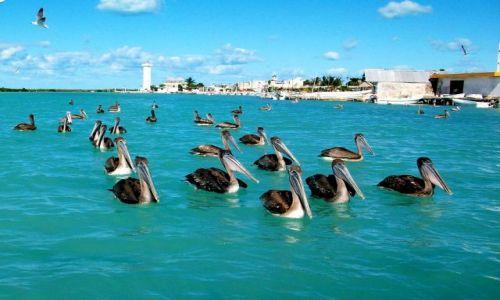 Zdjecie MEKSYK / Jukatan / Jukatan / Meksyk