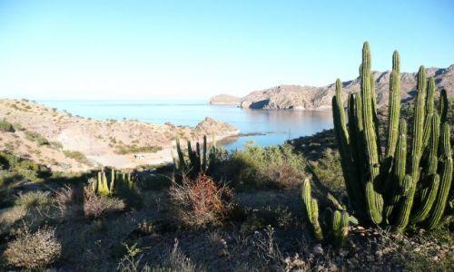 Zdjęcie MEKSYK / Baja California Sur / Cabo Verde / Pan iwładca tej ziemi -kaktus olbrzymi