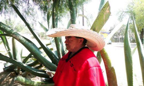 Zdjecie MEKSYK / Meksyk / Okolice Tenochtitlan / Ignacio wie wszystko o agawie !