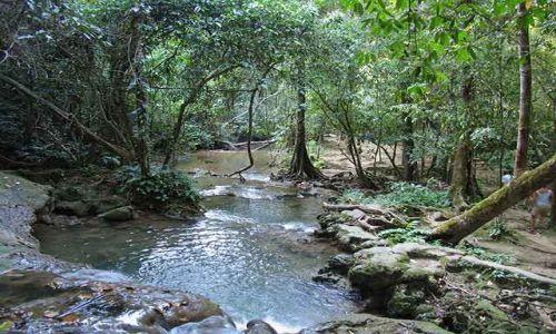 Zdjecie MEKSYK / Meksyk / Chiapas / w lesie tropikalnym