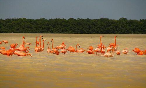 MEKSYK / Jukatan / Okolice Celestun / W poszukiwaniu krabów  konkurs