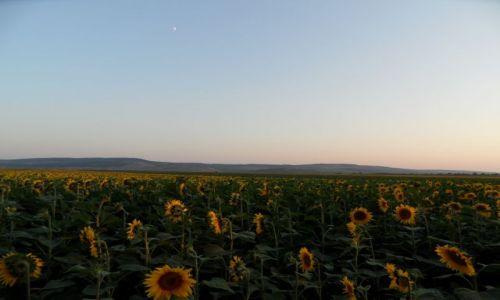 Zdjęcie MOłDAWIA / - / okolice Balti / Zachod nad stepem
