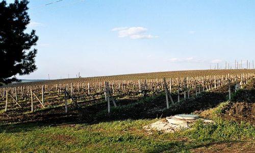 Zdjęcie MOłDAWIA / brak / Cricova / Winnice w okolicy Cricovej