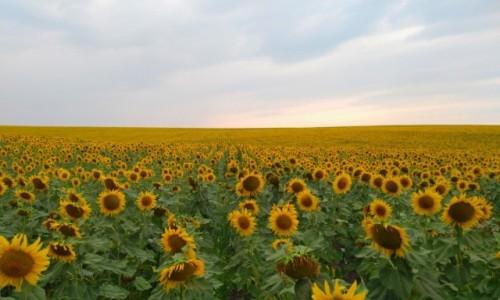 MOłDAWIA / - / droga do Styrczy / Krajobrazy Moldovy