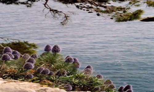 Zdjęcie MONAKO / brak / Monako / Monako
