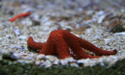 Zdjęcie MONAKO / brak / oceanarium / rozgwiazda :)