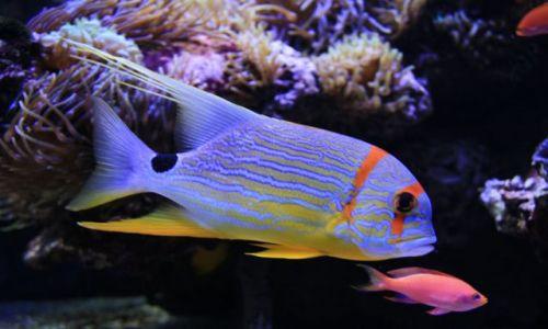 MONAKO / brak / oceanarium / ryba..