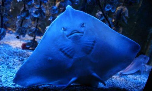 Zdjęcie MONAKO / - / Muzeum Oceanografii / Bogactwo oceanu