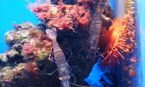 Zdjęcie MONAKO / - / Muzeum Oceanografii / Bogactwo oceanu cd.