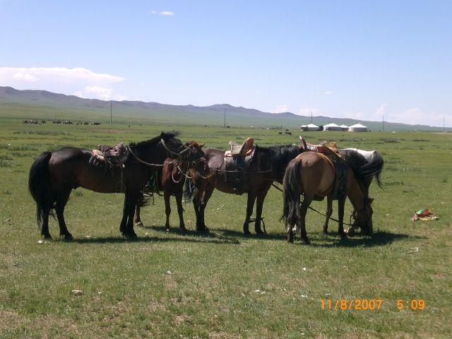 Zdj�cia: 500 km od U�an Bator, Ovorkhangai, gotowi do dalszej drogi, MONGOLIA