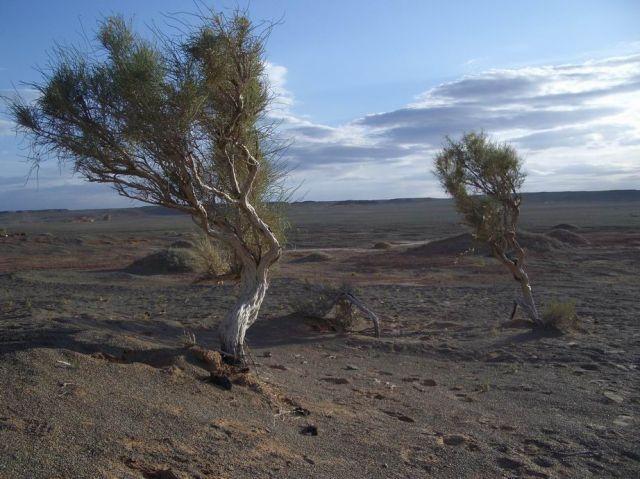 Zdj�cia: Mongolia, Pustynia Gobi, MONGOLIA