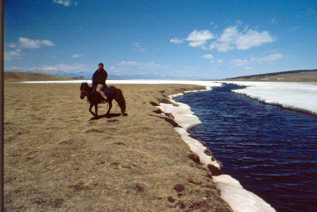 Zdj�cia: step, okolice jez.hovsgol, mongolskie koniki, MONGOLIA