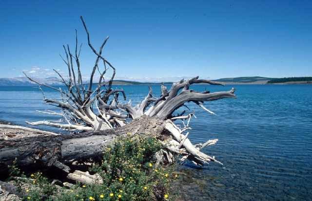 Zdjęcia: jedna z zatok po wschodniej stronie, Khövsgöl aimag, Jezioro Chubsugulskie, MONGOLIA