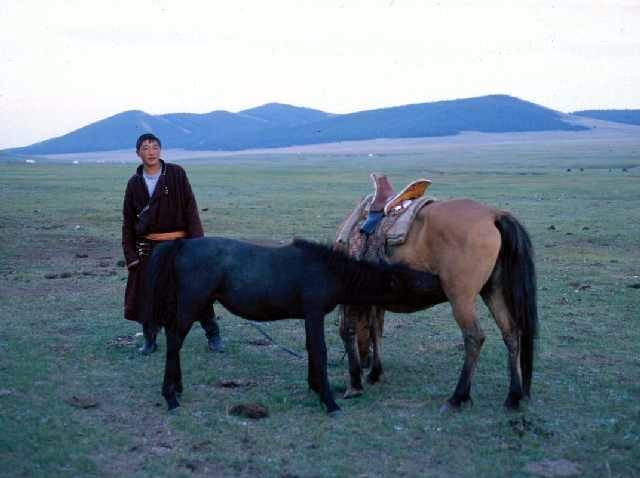 Zdjęcia: gdzieś w dolinie rzeki Beltesiin, Khövsgöl aimag, kolacja źrebaka, MONGOLIA