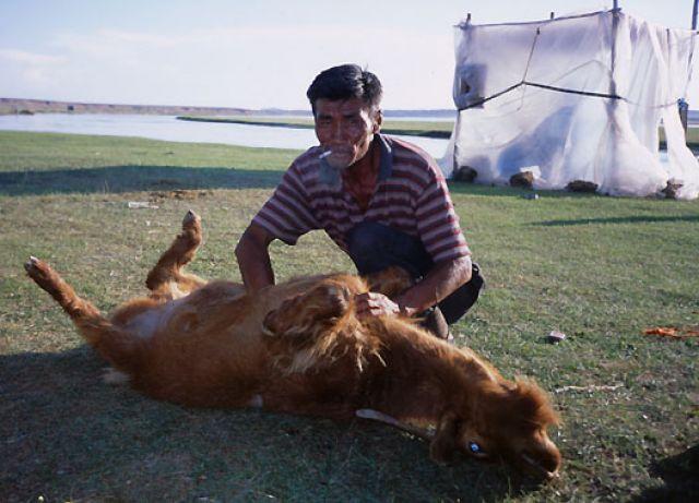 Zdjęcia: Mongolia, zachodnia Mongolia, szybki koniec, MONGOLIA