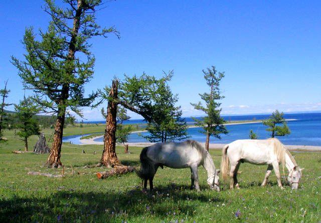 Zdjęcia: baaardzo piekne, CHUWSGUL NUUR, kawalek raju :-), MONGOLIA