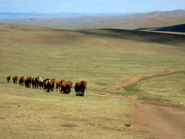 Zdjęcia: Mongolia, Gobi, Konie na stepie, MONGOLIA