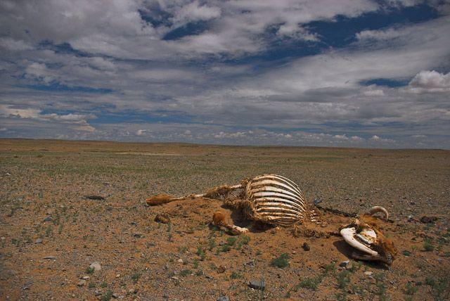 Zdjęcia: Gobi, Pustynia Gobi, MONGOLIA