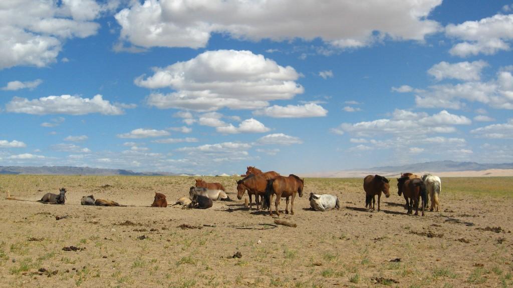 Zdjęcia: MONGOLIA , KONKURS -KONIE NA STEPIE , MONGOLIA