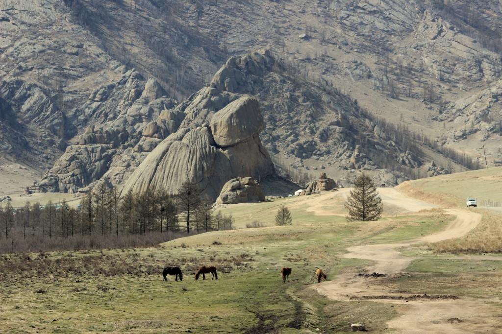 Zdjęcia: okolice Ułan Bator, okolice Ułan Bator, Żółw, MONGOLIA