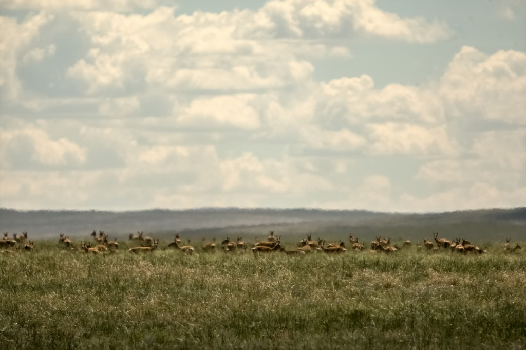Zdjęcia: płn.Mongolia, płn. Mongolia, A co - zdziwione...?, MONGOLIA