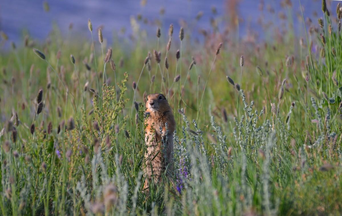 Zdjęcia: Laką, Poludnie, Kto tam?, MONGOLIA