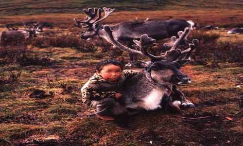 Zdjecie MONGOLIA / północna Mongolia / północna Mongolia / Mongolia - Caat