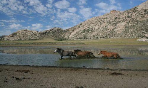 Zdjecie MONGOLIA / - / płn Mongolia / Step
