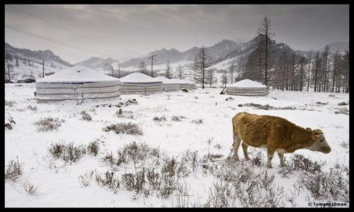Zdjęcie MONGOLIA / UB / Park Narodowy w Terelj / W obozie Mongolskich Nomadów