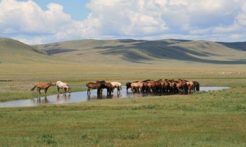 Zdjecie MONGOLIA / Mongolia / Mongolia / Koniki na wypasie