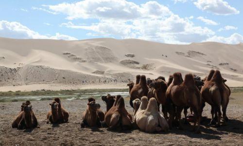 Zdjęcie MONGOLIA / Dalanzagdag / Pustynia Gobi / Garbata gromadka