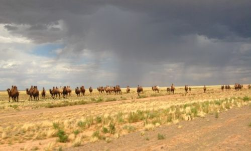 Zdjecie MONGOLIA / - / Gdzieś na stepie  / Wakacje marzeń....Mongolia
