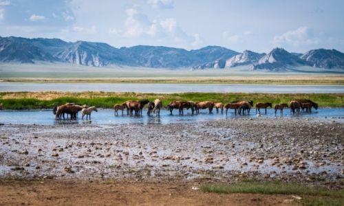 Zdjecie MONGOLIA / Mongolia Centralna / Step / Konkurs Foto: dzikie konie
