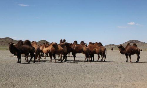Zdjęcie MONGOLIA / Dalanzadgad / Gobi / Przy wodopoju