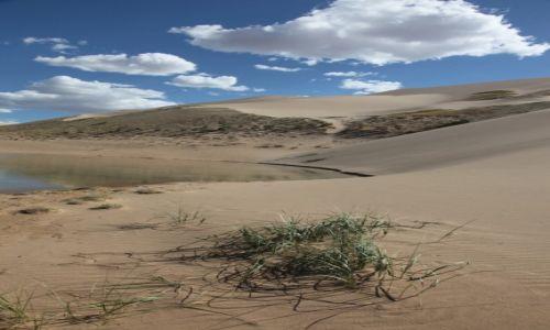 Zdjecie MONGOLIA / Dalanzadgad / Gobi / Żywotne trawy
