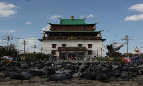 Zdjęcie MONGOLIA / Ułan Bator / Klasztor Gandan / Gołębie