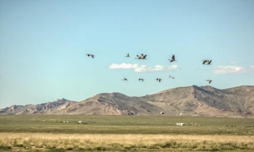 Zdjęcie MONGOLIA / płn. Mongolia / płn.Mongolia / Lecą żurawie... (ale niekoniecznie...)