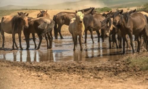 Zdjęcie MONGOLIA / płn. Mongolia / płn.Mongolia / Zapora na drodze...