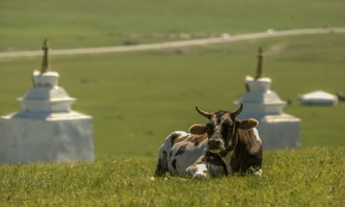 Zdjęcie MONGOLIA / płn. Mongolia / płn.Mongolia / Kontemplacja