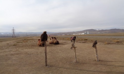 Zdjecie MONGOLIA / Miasto wydzielone Ułan bator / Okolice Ułan Bator / Ptaszki do polo