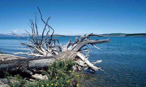 Zdjecie MONGOLIA / Khövsgöl aimag / jedna z zatok po wschodniej stronie / Jezioro Chubsugulskie