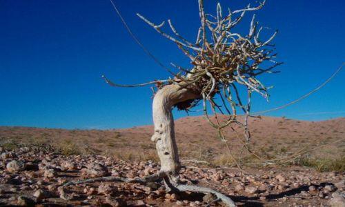 MONGOLIA / brak / Pustynia Gobi / Roślinność Spiaszczona