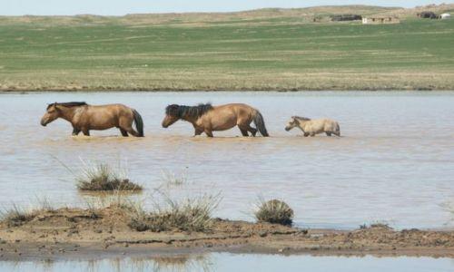 Zdjęcie MONGOLIA / Gobi / Gobi / Dzikie konie